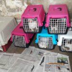 8 Katzen wurden kastriert, 7 Weibchen und ein Kater